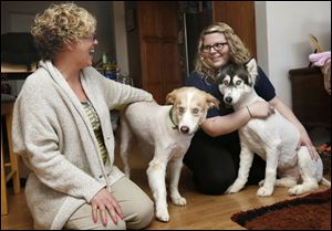 Janni Juhasz, left, holds Bugger, a Husky mix, and her daughter Katalin Juhasz holds Nala, a Husky, in their Toledo home. The dogs, which were accused of killing two show-quality pigs in Bedford Township last year, were released Thursday.