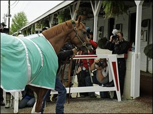 California Chrome walks into Barn 20 at Churchill Downs for the Kentucky Derby in Louisville, Ky.