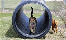 Dog-park-tunnel
