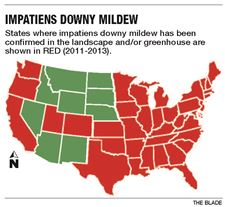 Downy-Mildew-jpg