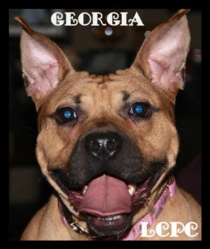 Georgia, formerly Butterball, is now up for adoption with Lucas County Pit Crew.