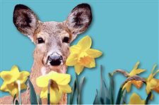 deer-illustration-daffodils