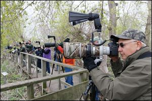 Neal Hohman, of Marietta, Ohio, gets a bird's-eye view at Magee marsh Wildlife Area in Oak Harbor, Ohio, during the Biggest Week in American Birding.
