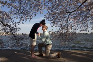 Steven Paska, 26, right, of Arlington, Va., asks his girlfriend of two years Jessica Deegan, 27, to marry him as cherry blossom trees in peak bloom line the tidal basin with the Jefferson Memorial in the background in Washington. Ms. Deegan said yes to the surprise marriage proposal.