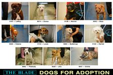 Lucas-County-Dogs-for-Adoption-5-13-2014-A