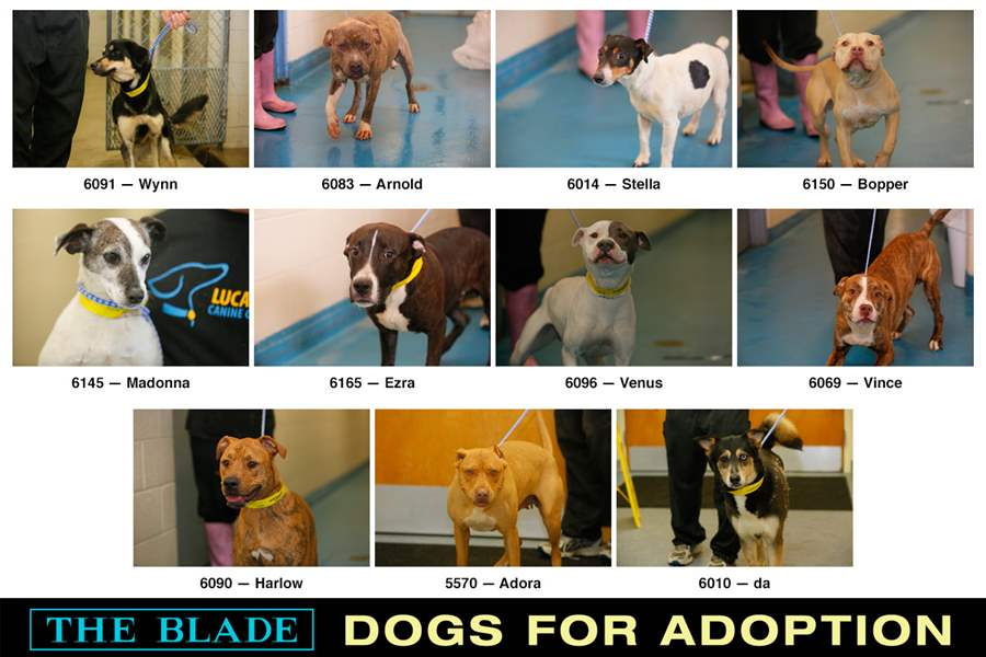 Lucas-County-Dogs-for-Adoption-5-13-2014-B