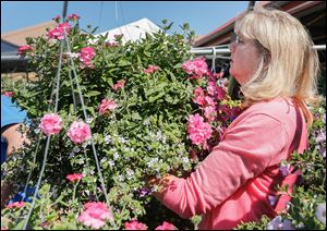 Janet Owens of Toledo leaves the Erie Street Market with a hanging plant she bought during the 25th annual Flower Day weekend. The event featured 30 area growers and thousands of shoppers.