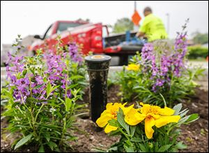 A Bishop Landscape Inc. of Toledo worker plants flowers  along Monroe Street  between 12th and 13th streets.
