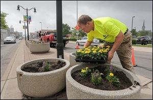 John Bishop of Bishop Landscape Inc. in Toledo plants flowers Wednesday along Monroe Street in Toledo.