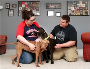 Amanda and Nathan Overholt of Northwood adopted two 'pit bulls' — Ginger, left, and Ace — from the Lucas County Pit Crew in the last year. The advocacy organization recently adopted out its 50th 'pit bull.'
