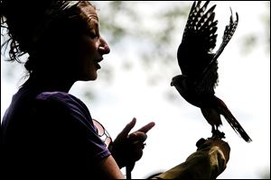 Natalie Miller talks to a group while handling a male American kestrel, the smallest falcon in North America.