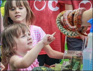 Seraphina Zolciak, 3, extends her finger to pet a corn snake as her sister Olivia Zolciak, 7, back, watches at the Toledo Botanical Garden. The Wild about Wildlife event was held on Sunday.