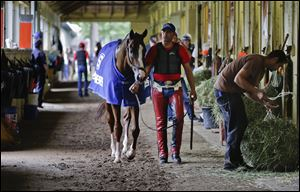 Exercise rider Willie Delgado hot walks California Chrome after a workout, today, in Elmont, N.Y.