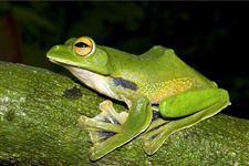 Myanmar-New-Species-1