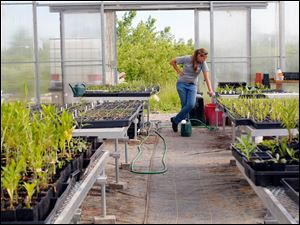 Becky Kanitz looks at seedlings while she fills her watering can in the greenhouse.