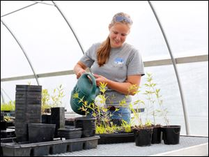 Becky Kanitz, an Olander Park System conservation team member, waters seedlings while working in the greenhouse.
