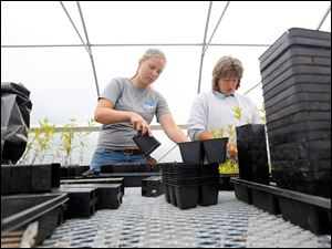 Becky Kanitz, left, and Robin Parker  transplant native plants to bigger pots. There are more than 30 indigenous plants growing in it that will be planted around Olander this summer.
