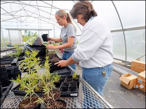 Becky Kanitz, left, and Robin Parker transplant native plants to bigger pots.