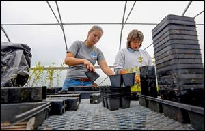 Becky Kanitz, left, a conservation team member, and Robin Parker, assistant manager at Olander Park System, transplant native plants to bigger pots  in the greenhouse at Sylvan Prairie Park.
