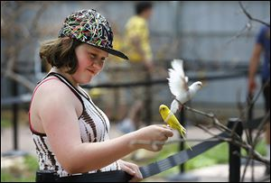 Hailey Meeker, 10,  feeds parakeets at the Keet Retreat exhibit at the Toledo Zoo.  The Bowling Green youth, along with her father, Mike; mother, Sara; and sister, Jazmin, 3, were taking in the new exhibit that allows visitors to interact with the birds.