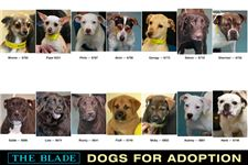Dogs-for-Adoption-July-2-2014