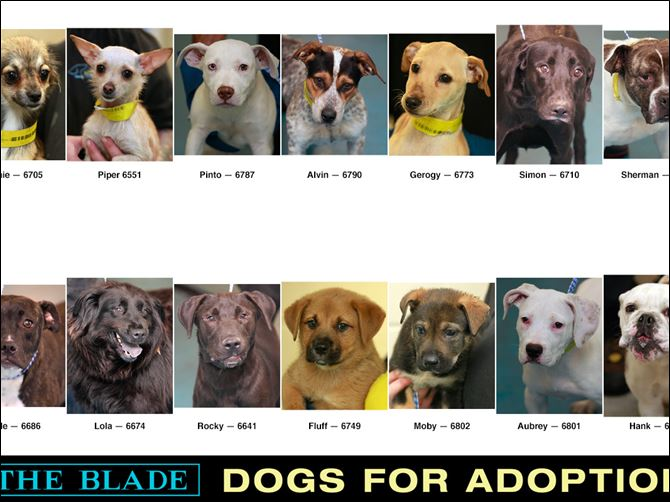 Dogs for Adoption July 2, 2014