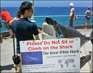 A man and child view a display of a great white shark Sunday at Manhattan Beach, Calif.,t