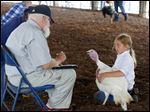 Kylie Spencer, right, 9, of Waterville shows her turkey to judge Bob Johns during the opening day at the Lucas County Fair on Tuesday. Early fairgoers were met with rain showers and strong winds.