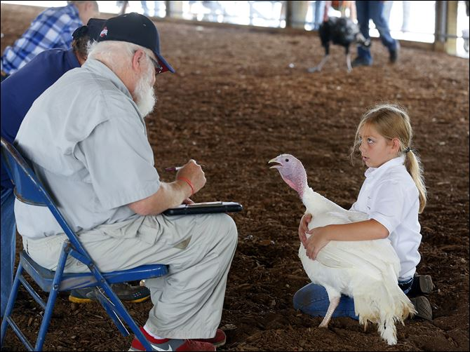 n4fairjudgement-5 Kylie Spencer, right, 9, of Waterville shows her turkey to judge Bob Johns during the opening day at the Lucas County Fair on Tuesday. Early fairgoers were met with rain showers and strong winds.