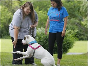Lindsey, left, and Christina Reed work with their deaf dog Mari, at their Toledo home on July 3. Mari, a '‍pit bull' mix was adopted a little more than a year ago from the Lucas County Pit Crew.