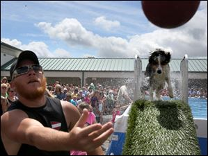 Bret Reynolds of Luckey, left, tosses the toy as his male 2-year-old Australian Shepherd, Dallas, makes his way out of the water.