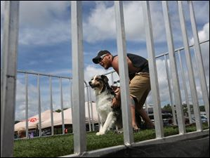 Bret Reynolds of Luckey gets his male 2-year-old Australian Shepherd Dallas set before Dallas took the plunge during the second day of this year's Ultimate Air Dogs contest.