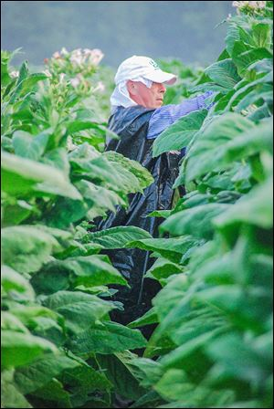 Baldemar Velasquez, the founder and president of FLOC, labored on a North Carolina tobacco farm in 2008.