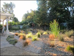 A drought-tolerant garden that includes cattail, sedge, and rush in the foreground; and fescue, salvia, penstemon in the background.