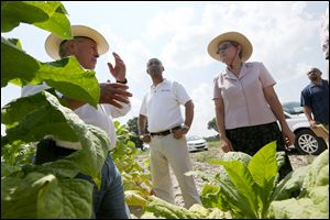 President Baldemar Velasquez, left, discusses the working condition differences between documented and undocumented migrants with AFL-CIO Executive Vice President Tefere Gebre, center, and U.S Rep. Marcy Kaptur (D., Ohio), right, while leading a tour Saturday  organized by the Farm Labor Organizing Committee, AFL-CIO (FLOC), of a tobacco worker's home and a tobacco field near Dudley, North Carolina.