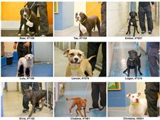 Dogs-for-Adoption-July-29-2014