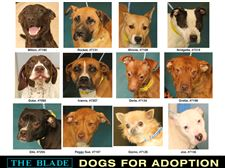 Lucas-County-Dogs-for-Adoption-7-30