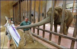 Elephant manager Ben Whitebread helps Renee paint as elephant keeper Teresa Pate steadies the easel in front of an audience at the Toledo Zoo. The activity was arranged in conjunction with 96 Elephants, a campaign by the Wildlife Conservation Society to end the sale of elephant ivory.