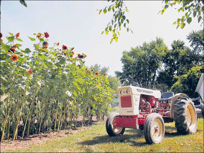 Chuck Sattler's tractor sits next to his garden in Maumee. Chuck Sattler's tractor sits next to his garden in Maumee.