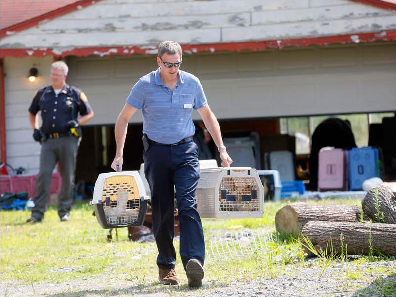 Gary Willoughby, front, with The Toledo Humane Society removes the remaining animals at 651 S. Crissey Rd.