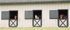 TRAVEL-UST-VIRGINIA-RESORT-Equestrian-Center