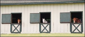 Horses peek out the windows of the Equestrian Center for expert and casual riders.
