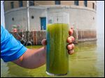 Shane Gaghen of Oregon holds a glass of algae filled Lake Erie water, near the Toledo water intake