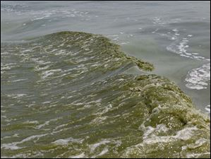 Algae is visible in the wake created by a boat in Lake Erie, near the Toledo water intake crib.