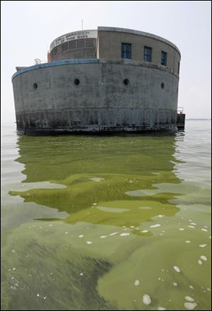Algae surrounds the city of Toledo's  water intake crib in Lake Erie.