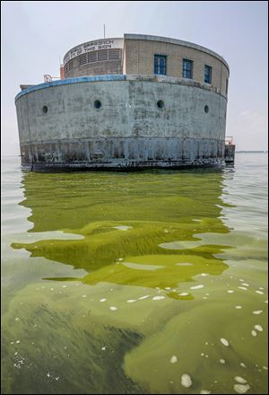 Algae is visible in Lake Erie near the Toledo water intake crib, Sunday.