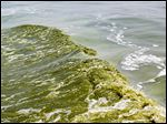 An algae bloom is visible in the wake created by a boat in Lake Erie, near the Toledo water intake crib, in 2014.