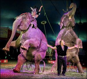 Armando Loyal, circus elephant trainer and caretaker, and his elephants please the crowd.