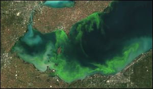This satellite image provided by NOAA shows the algae bloom on Lake Erie in 2011 which according to NOAA was the worst in decades.
