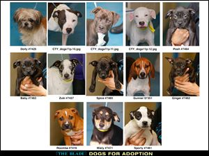 Lucas County Dogs for Adoption: 8-12